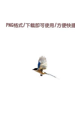 载直接使用古代喜鹊鸟古风设计高端大气-PNG古代鸟 PNG格式古代