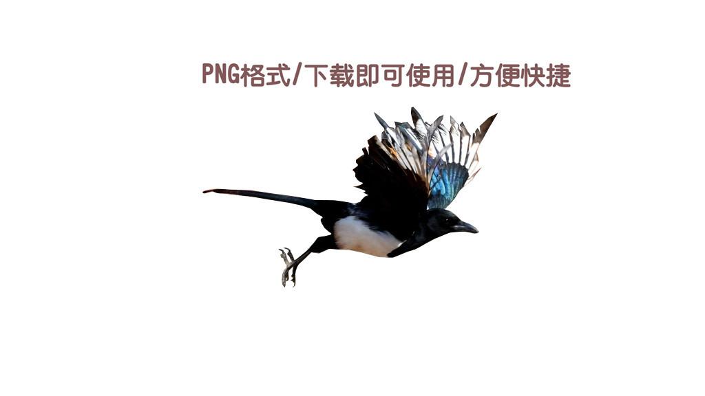 png下载直接使用喜鹊鸟古风设计高端大气图片素材 模板 0.13MB 动物大全 自然