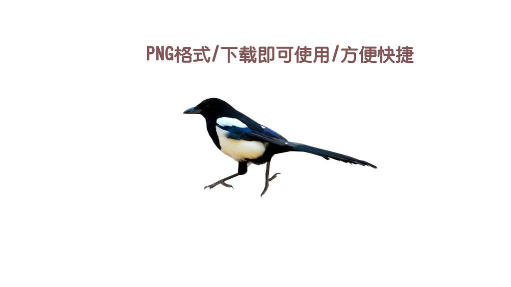 png格式下载直接使用古风喜鹊鸟大气可爱图片素材 模板 0.04MB 动物大全 自然