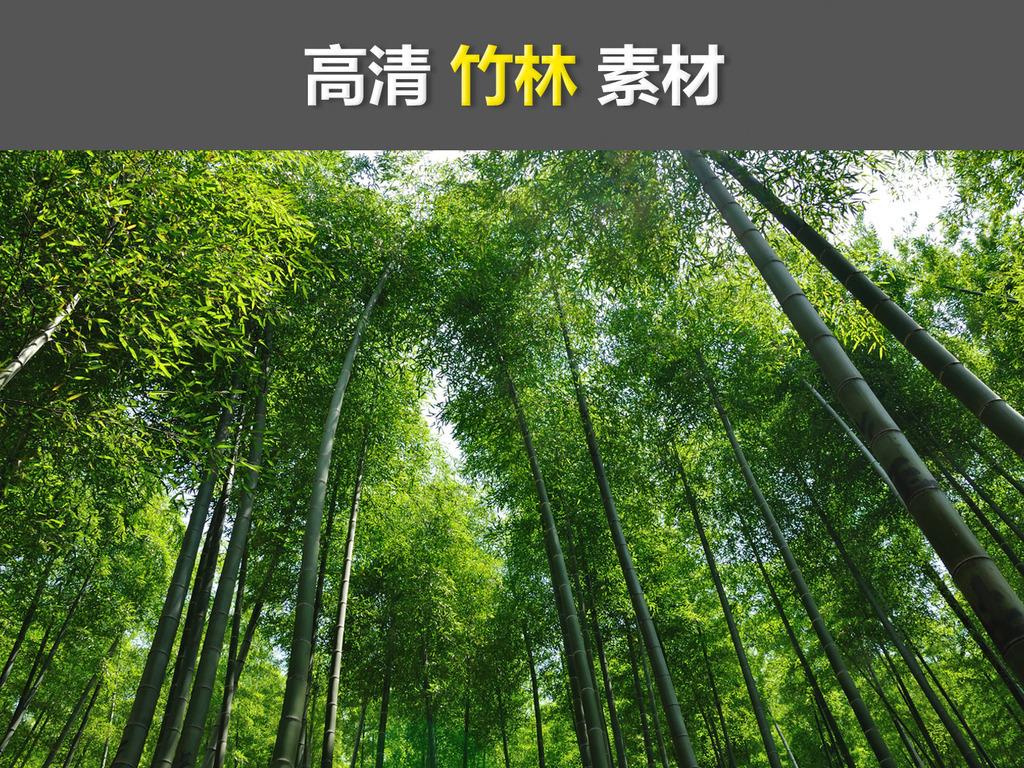 高清唯美绿色竹林竹子banner背景素材图片