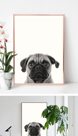 简约可爱动物狗狗摄影装饰画