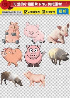 小猪睡觉图片素材 小猪睡觉图片素材下载 小猪睡觉背景素材 小猪睡觉
