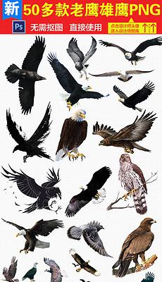 飞翔的老鹰图片素材 飞翔的老鹰图片素材下载 飞翔的老鹰背景素材 飞