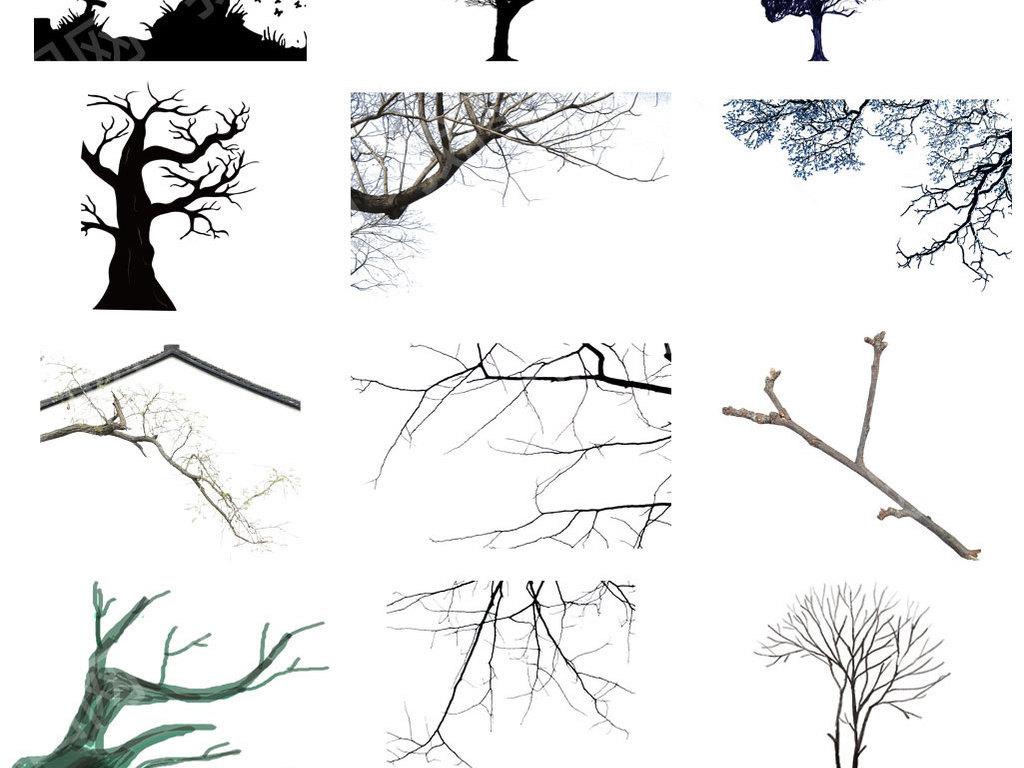 各种干树枝枯树枝免抠png透明素材图片 模板下载 33.17MB 其他大全 自然