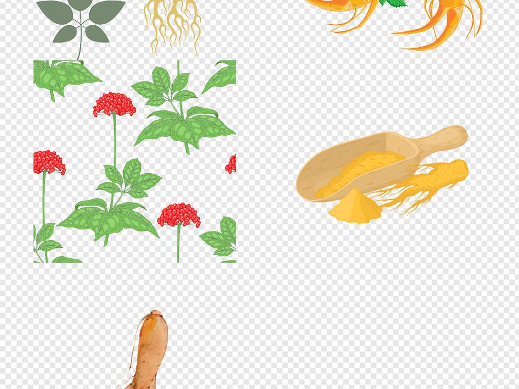 卡通手绘野山参西洋参人参png免扣素材图片 模板下载 5.16MB 食物饮品 大全 生活工作