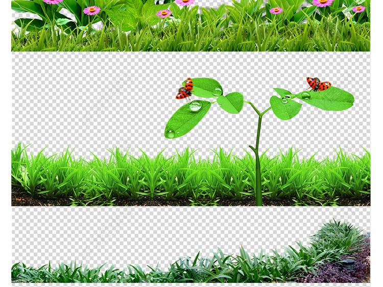 绿草地自然草丛鲜花背景