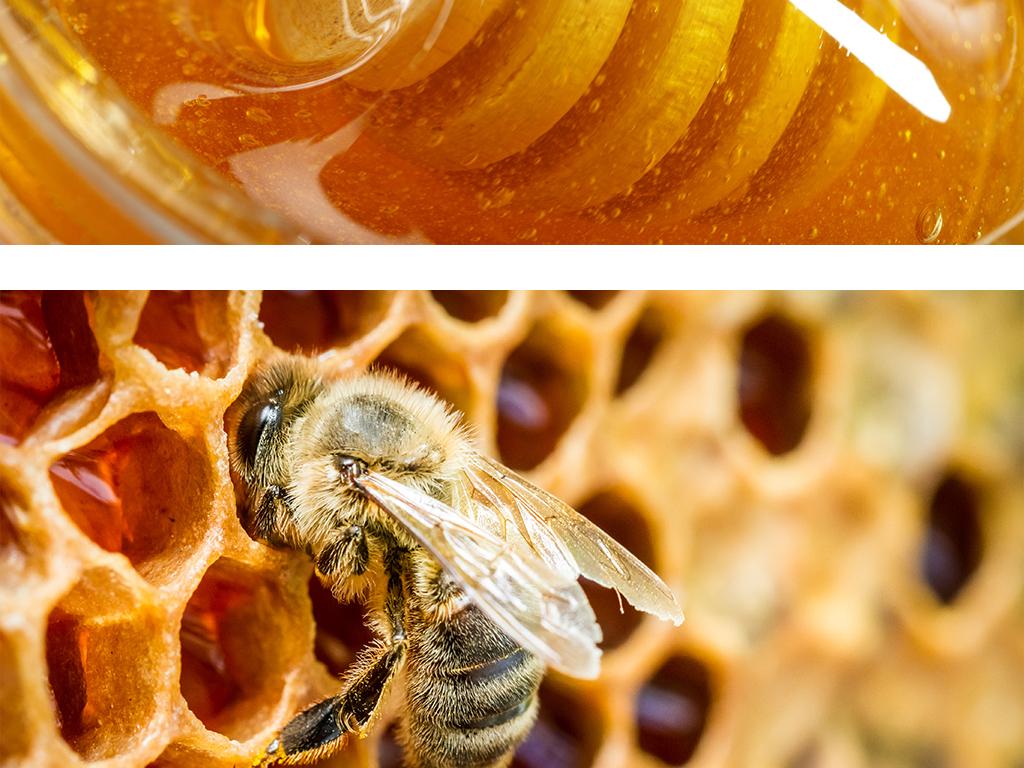 食材蜜蜂蜜原料蜂巢蜂王浆banner背景图片设计素材 高清模板下载 93.63MB 其他大全