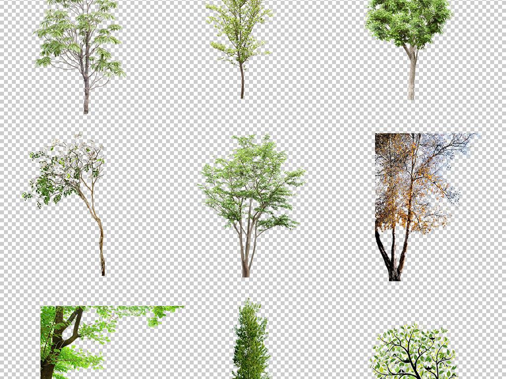 绿化效果图                                          景观