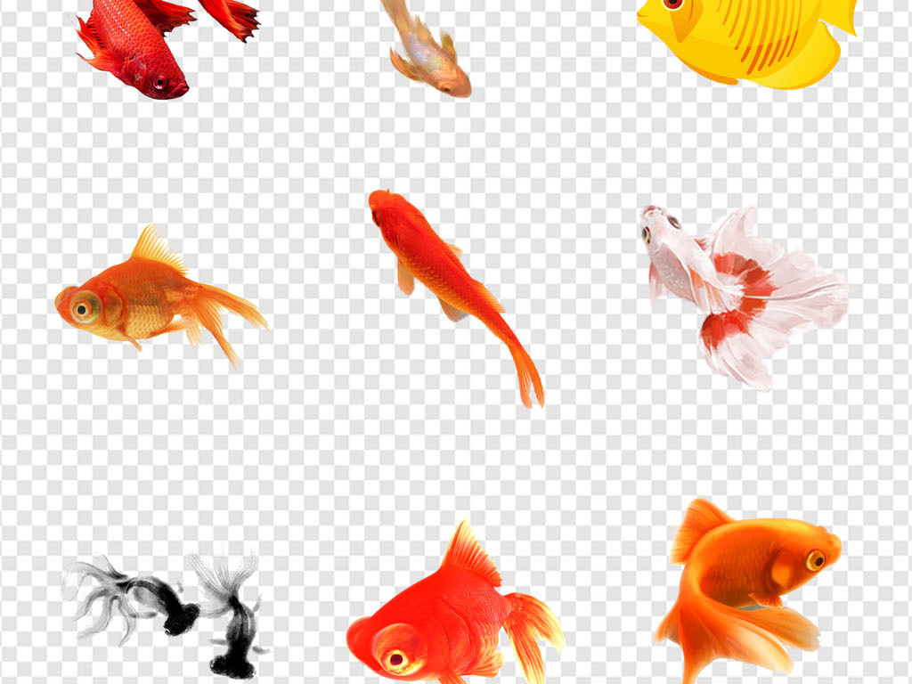 免抠元素 自然素材 动物 > 国画风水金鱼中国风水墨画金鱼水彩png素材