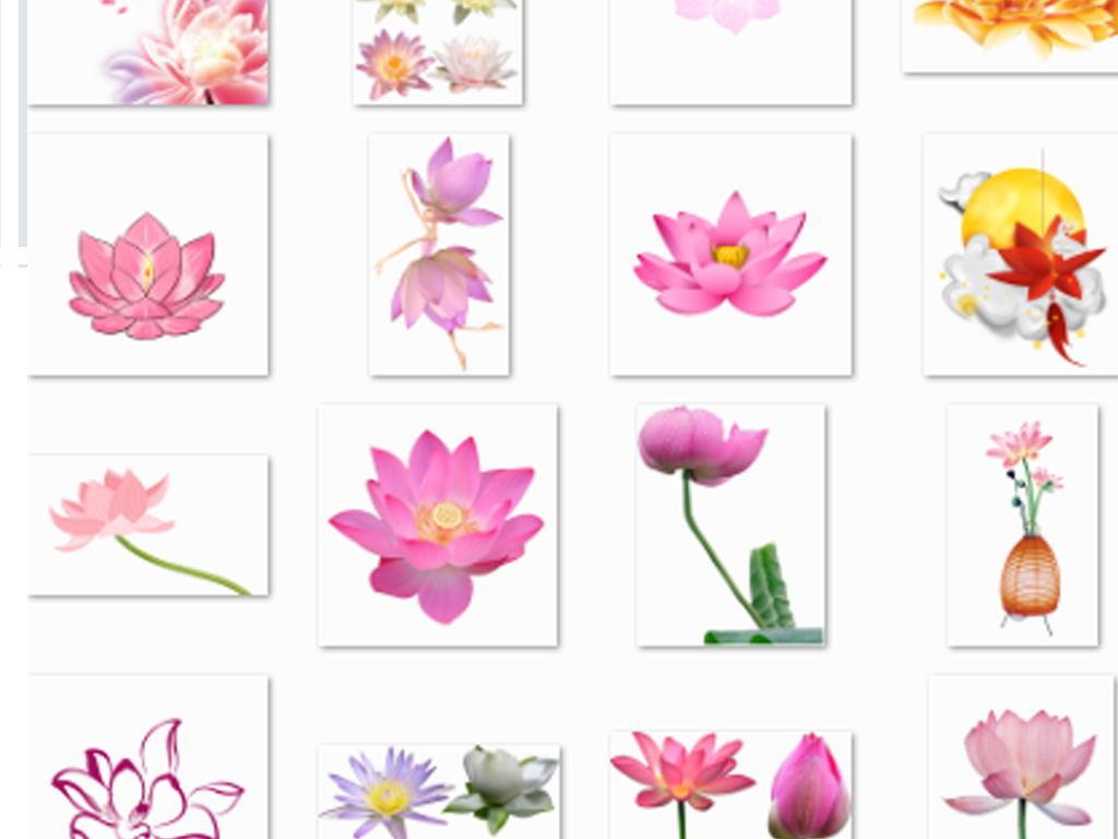 花卉荷花花瓣中秋荷花荷花鲤鱼水中荷花莲子荷花剪纸荷花花朵手绘