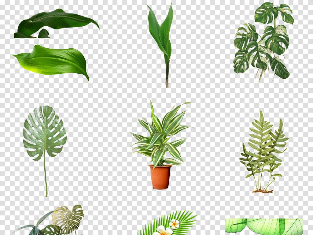 森系北欧热带雨林手绘水彩树叶绿植插画设计素材