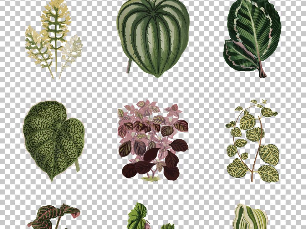 文艺小清新手绘植物叶子免抠png素材