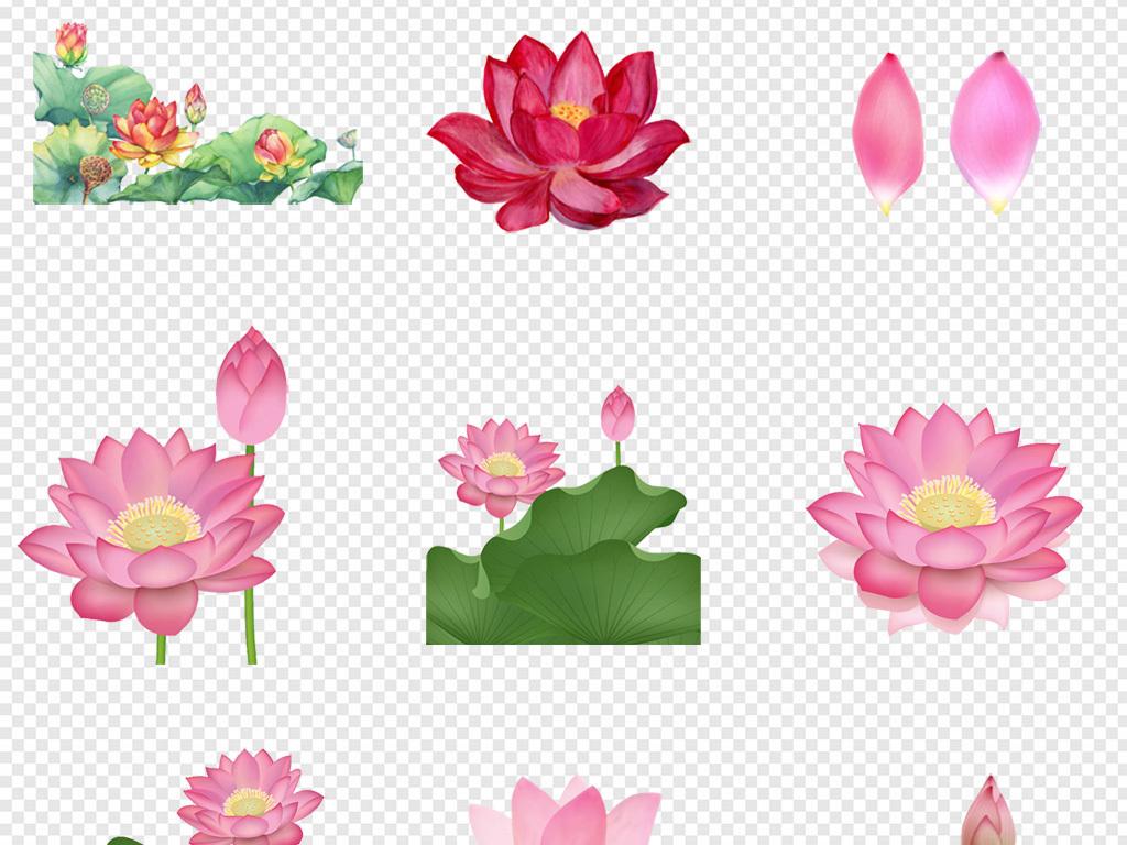 卡通手绘花朵荷叶荷花png素材