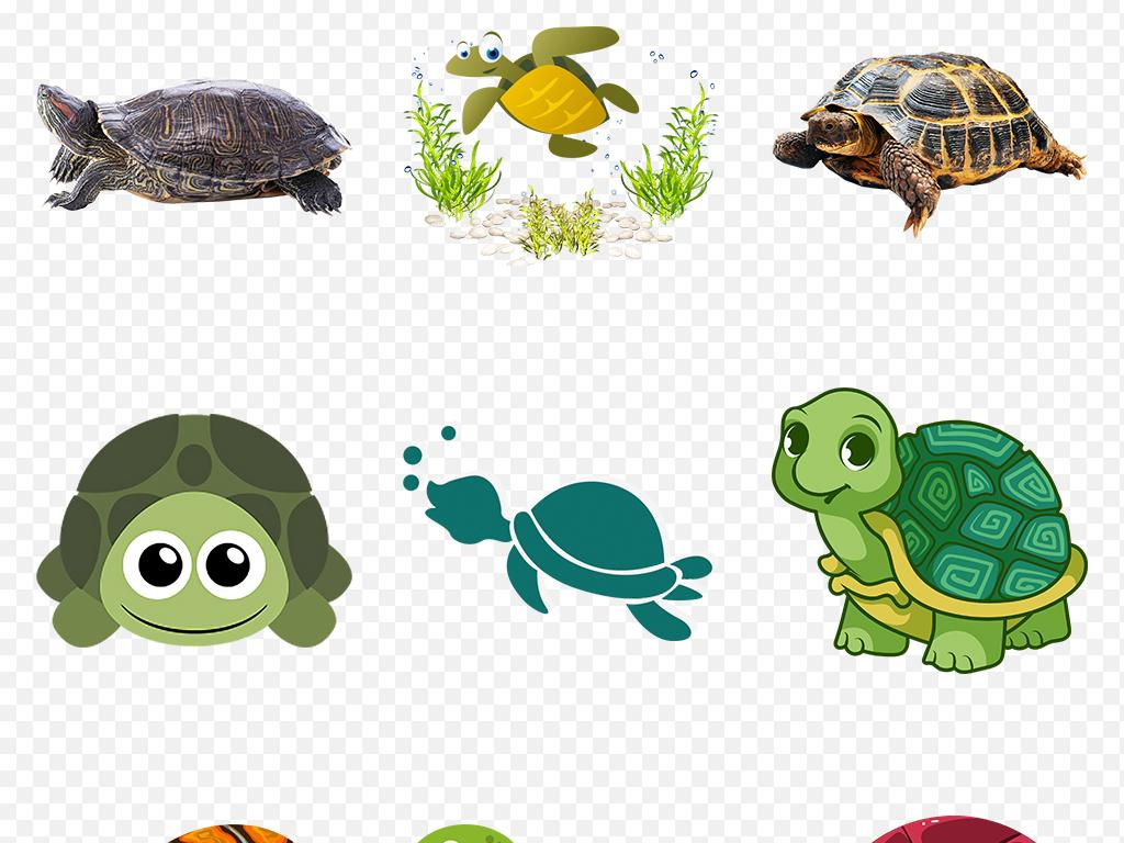 可爱卡通乌龟海洋动物海龟海报素材背景图片png