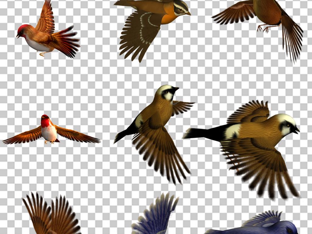 火烈鸟                                          水彩
