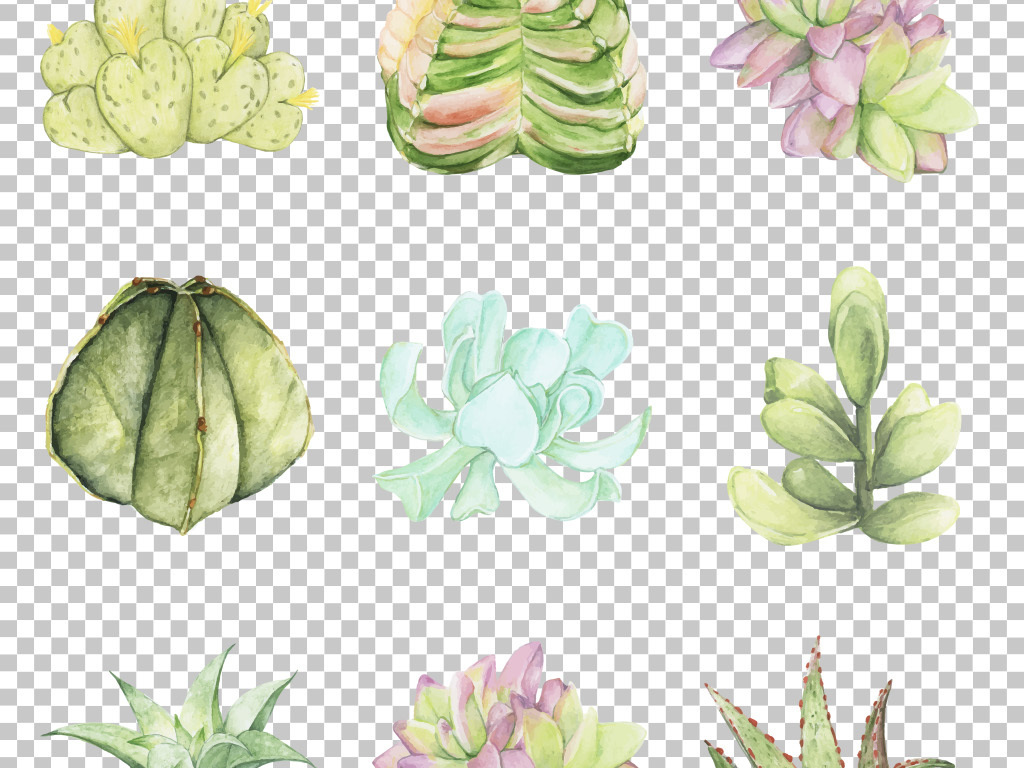 小清新手绘水彩多肉植物花卉免抠png素材图片_模板(92
