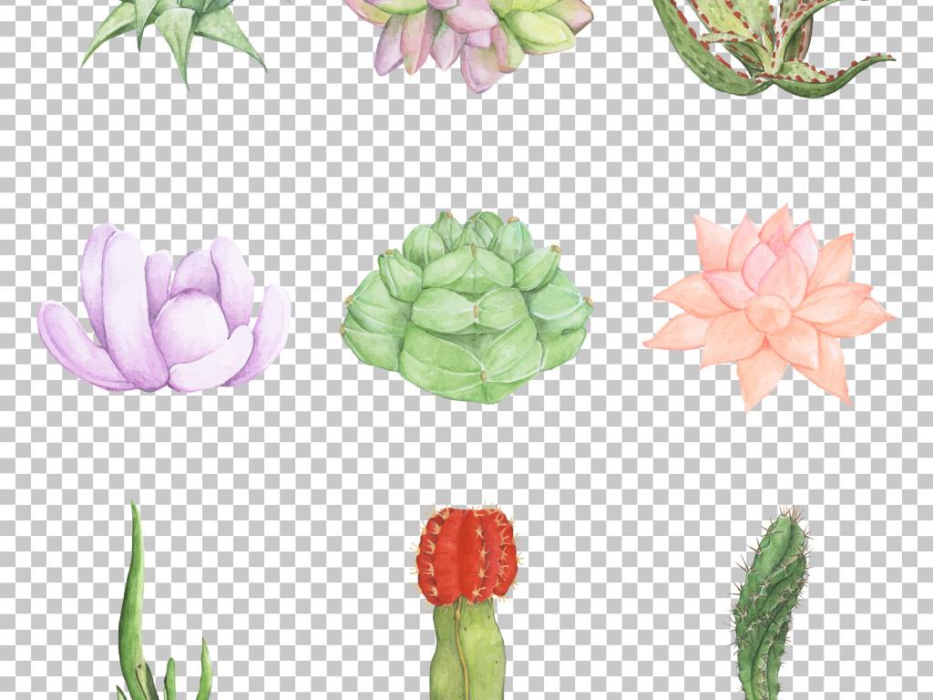 小清新手绘水彩多肉植物花卉免抠png素材