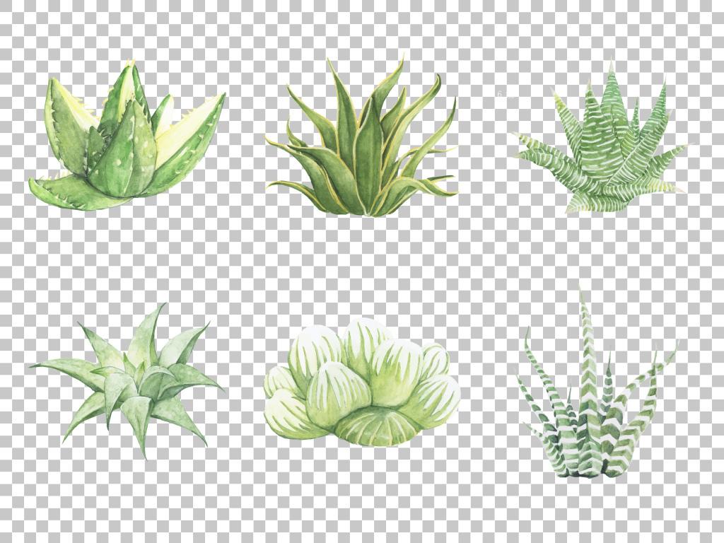 手绘植物素材免抠小清新植物素材绿色植物png素材仙人掌