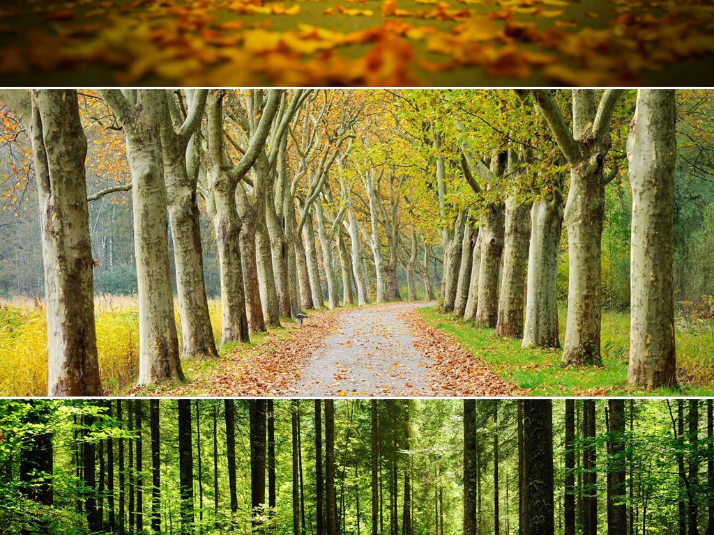 唯美森林公园树林森林风景自然风光景观背景图