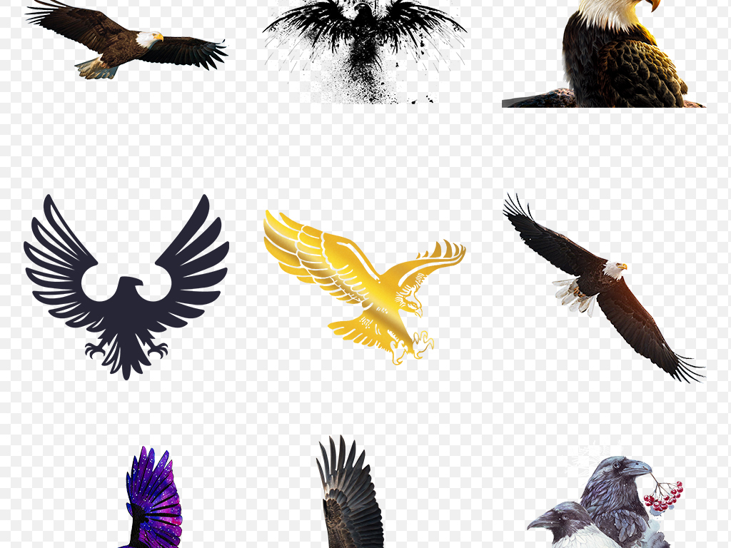卡通创意飞翔老鹰猎鹰动物海报素材背景图片png