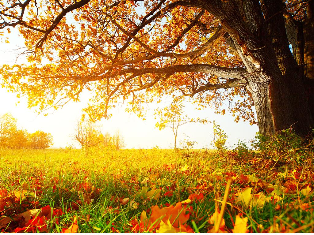 背景 壁纸 风景 绿色 绿叶 森林 树叶 植物 桌面 1024_768