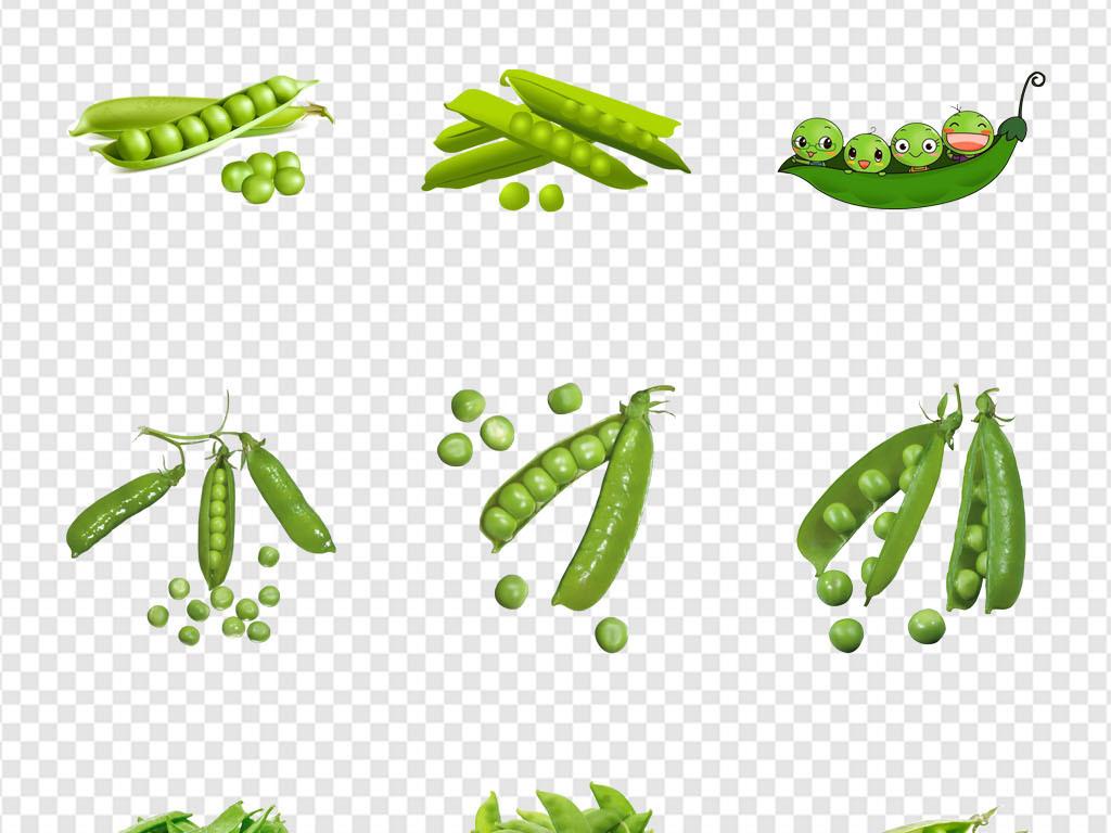 绿色豆子卡通豆子卡通豌豆手绘