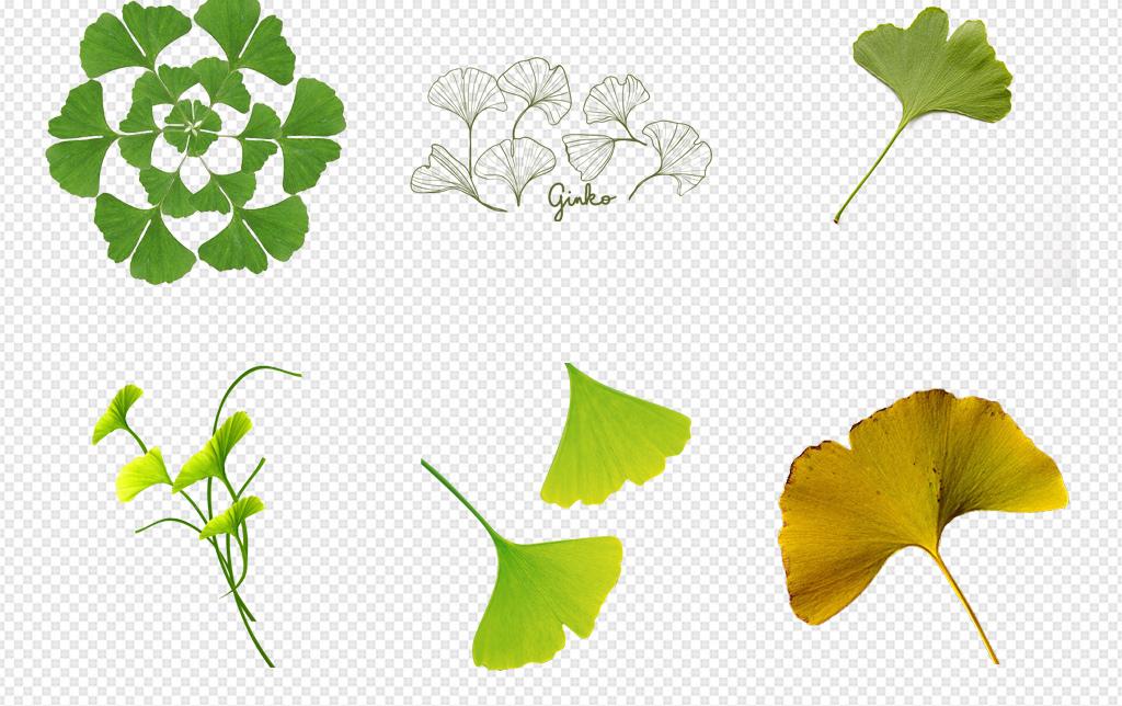 秋天黄色树叶银杏叶海报背景png素材