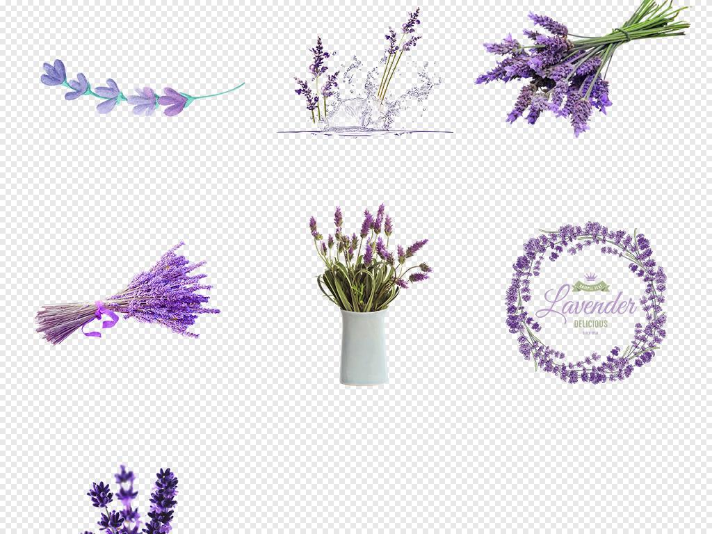 花卉手绘薰衣草花卉薰衣草香薰紫色素材详情素材清新浪漫紫色薰衣草