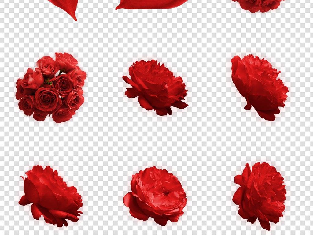 手绘月季玫瑰花瓣浪漫情人节花卉免扣png