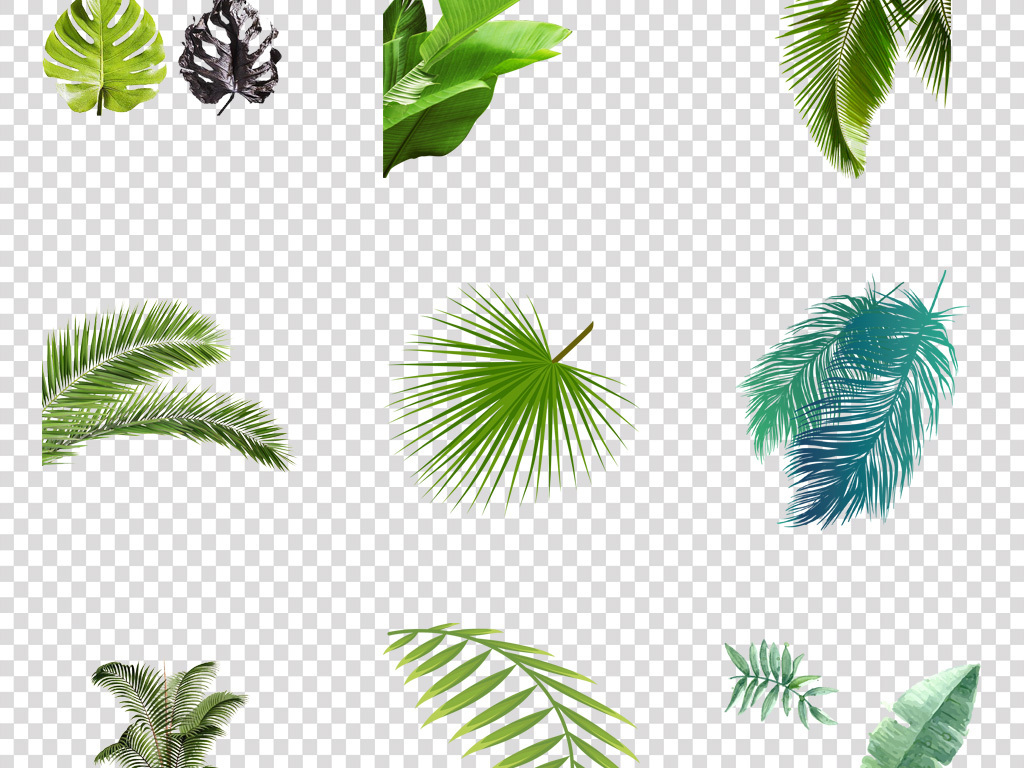 手绘小清新热带雨林树叶插芭蕉叶素材热带棕榈叶北美水彩画素材芭蕉叶