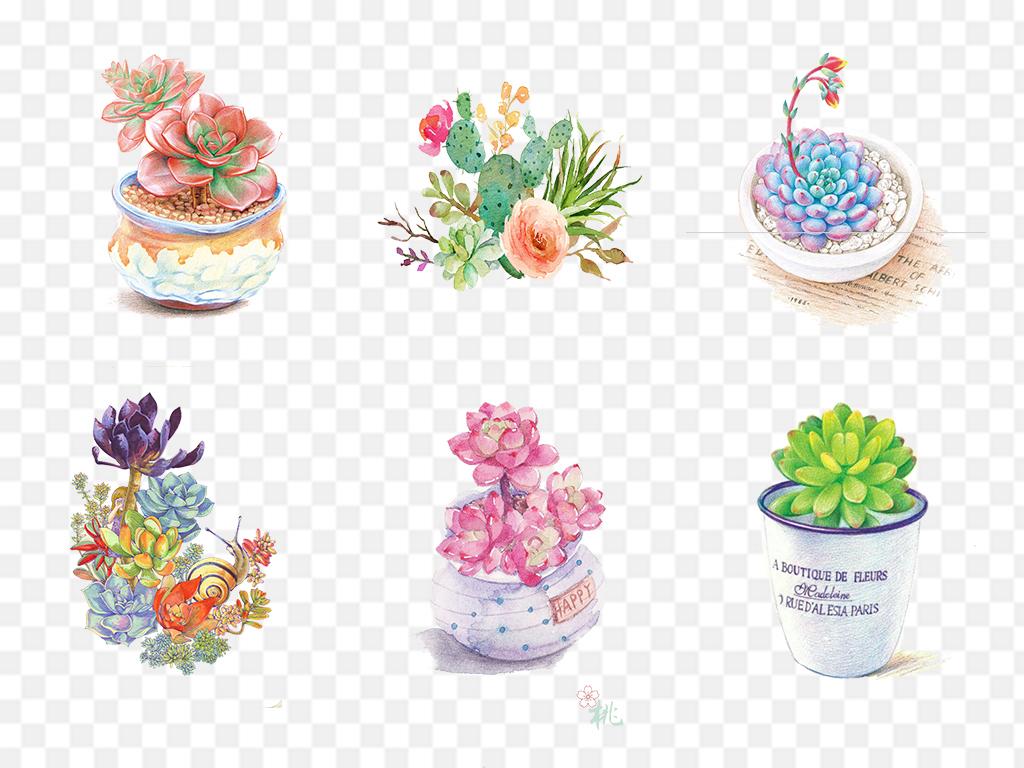 水彩手绘多肉植物png
