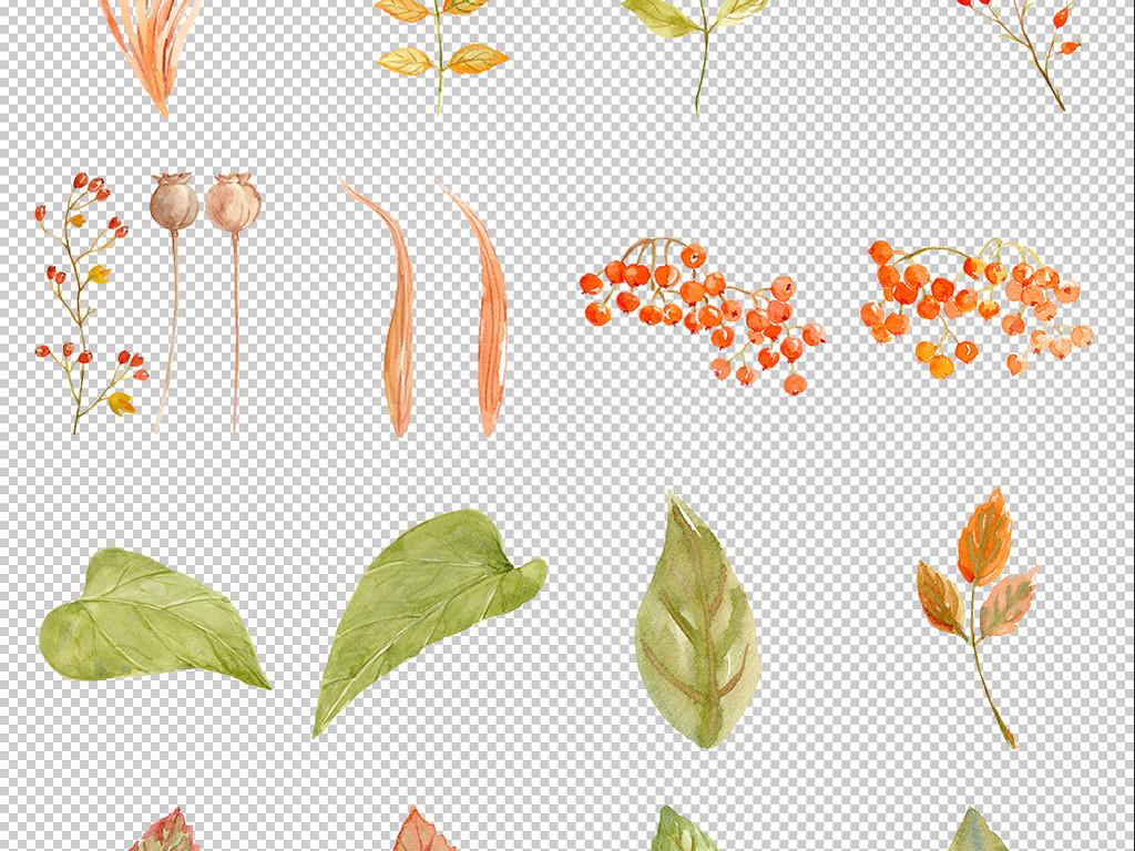 手绘水彩秋季花朵向日葵树叶图案贴纸png免抠透明背景