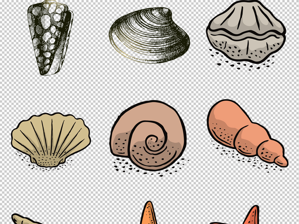 手绘彩绘海洋贝壳海螺图片png素材psd