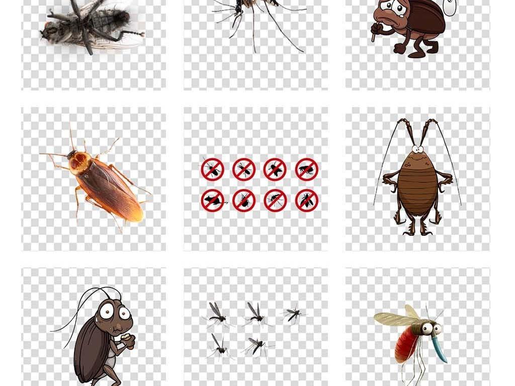 昆虫害虫图片素材_模板下载(20.61mb)_动物大全_自然