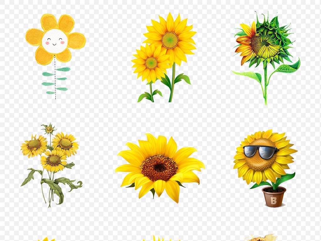 卡通手绘向日葵太阳花海报素材背景图片png