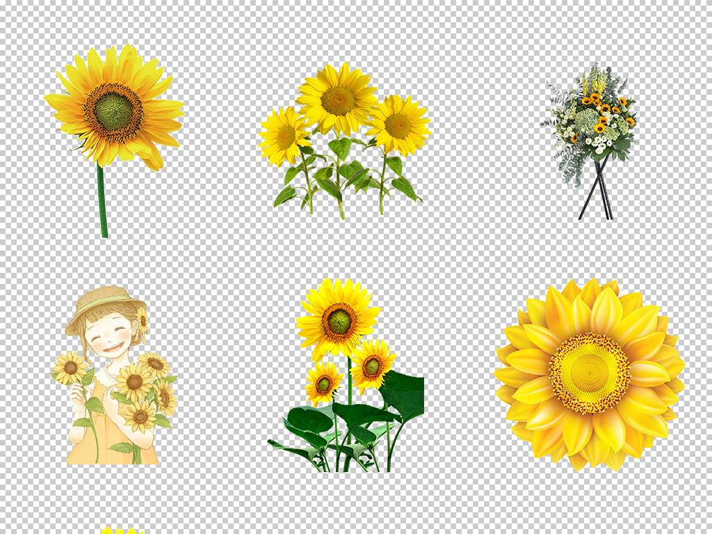 花卉 > 水彩向日葵手绘花朵元素太阳花请柬海报png免抠图5  素材图片