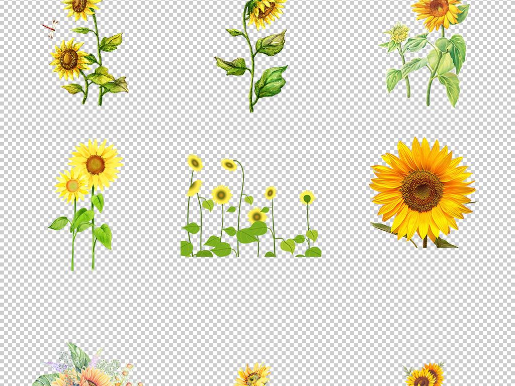 水彩向日葵手绘花朵元素太阳花请柬海报png免抠图6