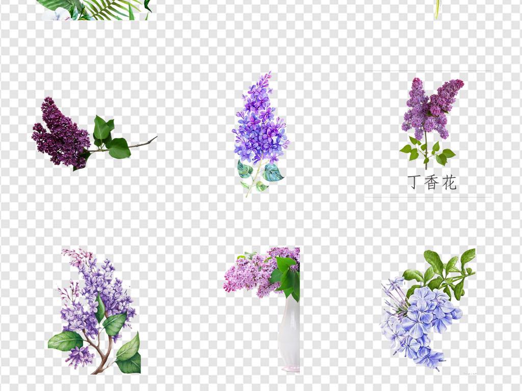 花朵                                          手绘花朵花店