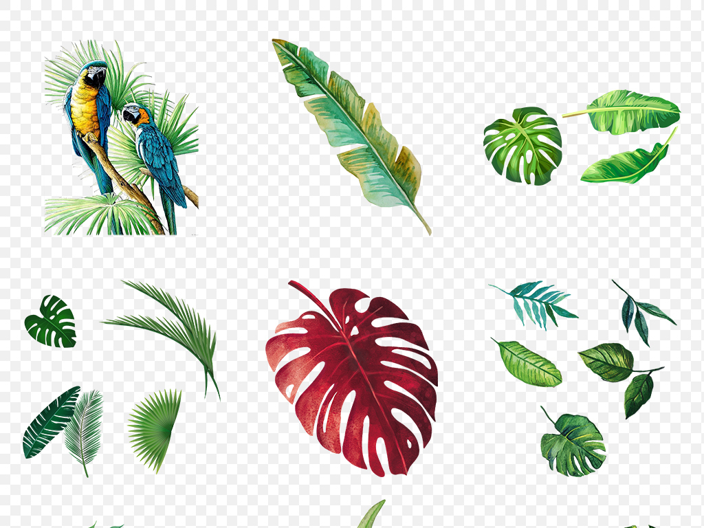 海报热带夏季树叶植物芭蕉叶软件叶子背景图片png手机有没有v海报3d素材图片
