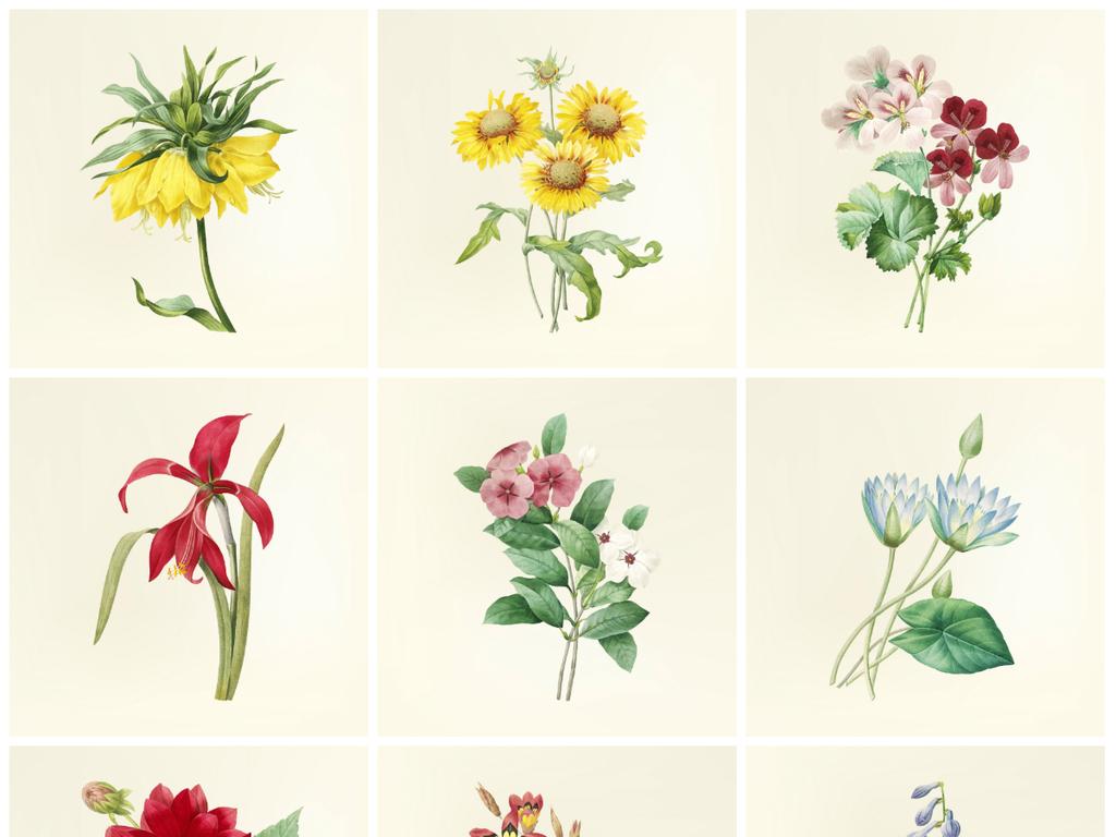矢量花展植物园手绘水彩花卉素材