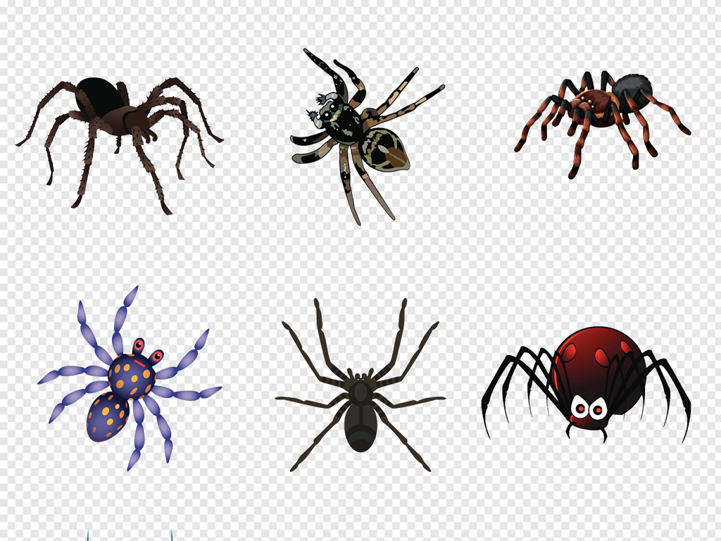 卡通手绘爬行动物昆虫黑色蜘蛛png素材