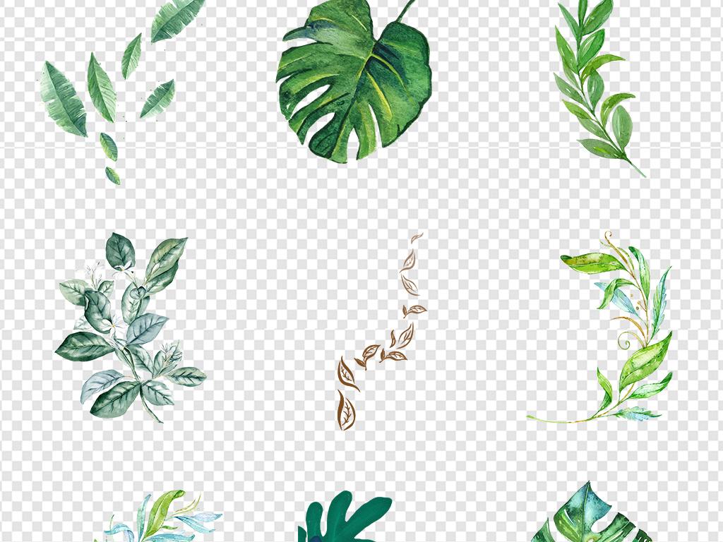 边框装饰背景热带雨林树叶水彩绿植手绘树叶森系水彩树叶元素手绘水彩