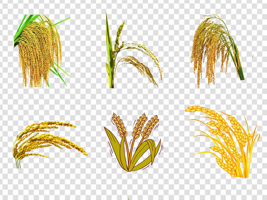 粮食麦子卡通实物水稻稻谷海报png素材图片
