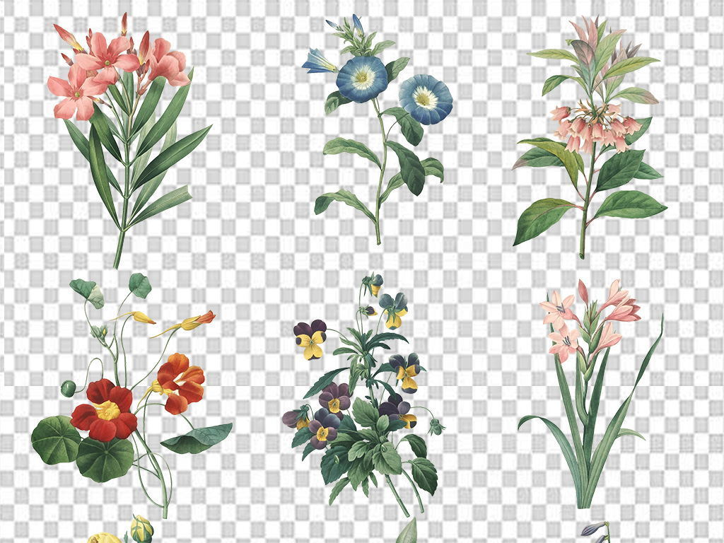 花手绘水彩小清新花卉花朵背景png海报素材