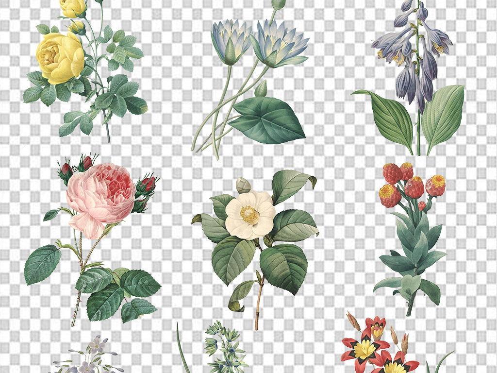 花卉素材                                          卡通花朵装饰画