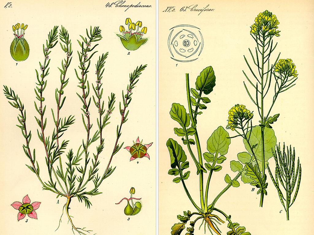免抠元素 自然素材 树叶 > 手绘彩色植物图谱英文cg漫画插画场景设定