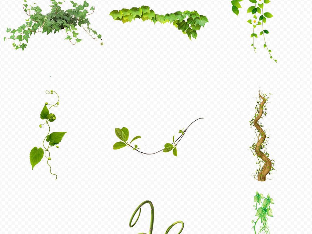 花纹边框绿藤图片绿藤花边绿藤植物