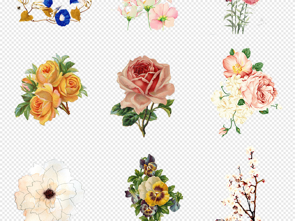 线描花卉花卉图花卉水彩素材水彩花卉菊花手绘花卉手绘背景手绘水彩鲜