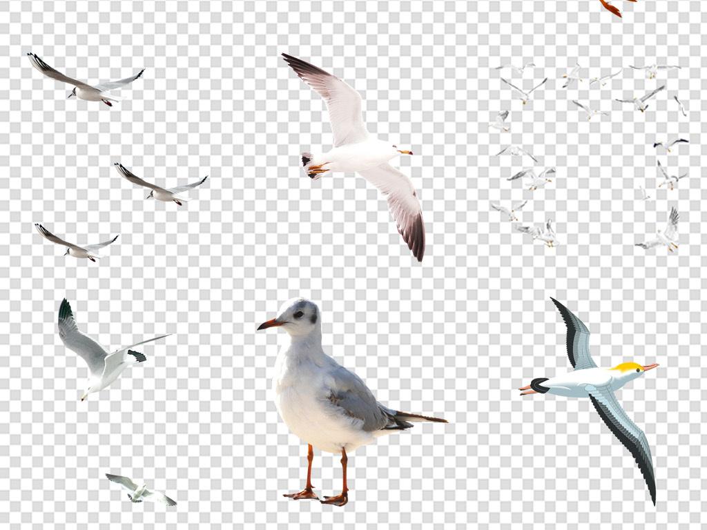群海鸥手绘海鸥剪影                                          白鸽