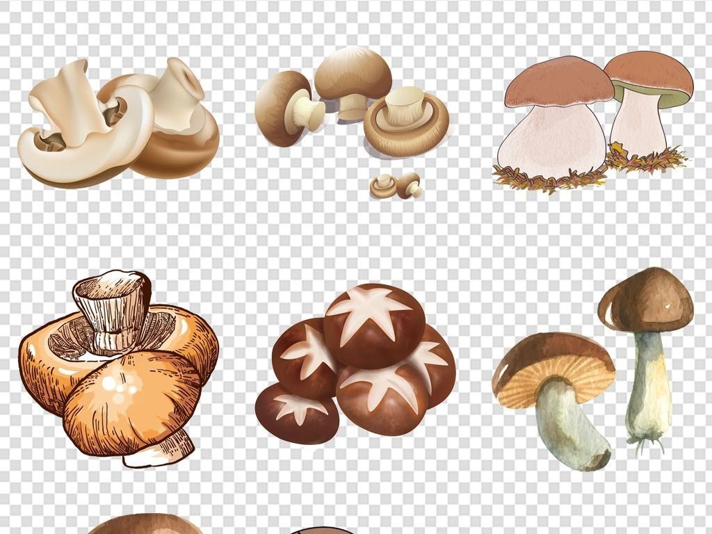 卡通手绘蘑菇菌菇海报免抠素材png